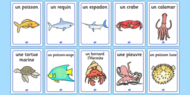 Under the Sea Display Posters French - french, under the sea, display posters, display, posters