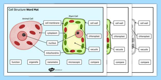 Cell Structure Word Mat - cell structure, word mat, word, mat, cell, structure