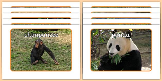 Jungle & Rainforest Animals Display Photos - Jungle, Rainforest, Display Posters,  photo, display, photos, vines, A4, display, forest, ecosystem, rain, humid, parrot, monkey, gorilla