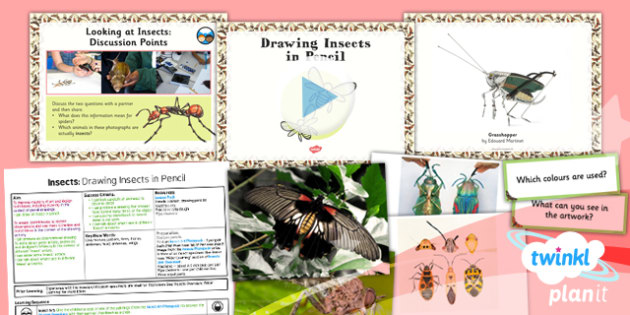 Art: Insects Unit: Drawing Insects in Pencil LKS2 Lesson Pack 1
