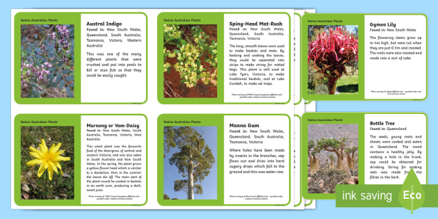 Native Australian Plants Fact Cards - Native Australian Plants, Indigenous Australians, Australia, Aboriginals, plant uses, fact cards, pl
