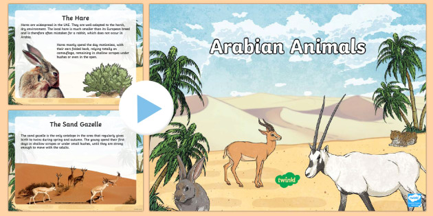 Arabian Animals PowerPoint - Science, Living World, Animals, Arabian, UAE, desert