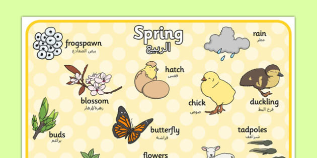 Spring Word Mat Arabic Translation - arabic, Spring, word mat, writing aid, lambs, daffodils, new life, flowers, buds, plants, growth