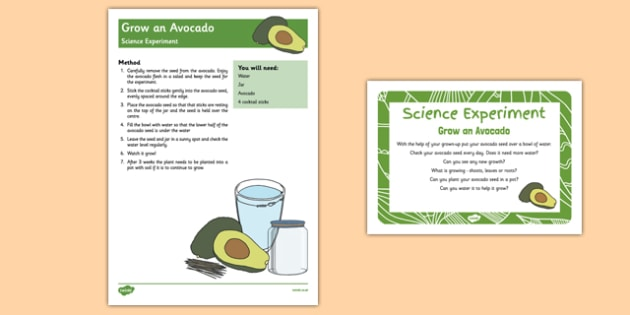 EYFS Grow an Avocado Science Experiment and Prompt Card Pack - seed, stone, regrow