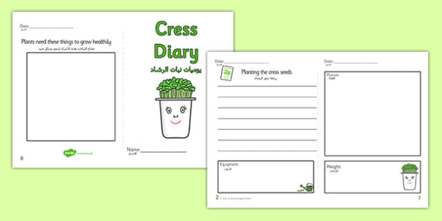 Growing Cress Diary Writing Frame Arabic Translation - arabic, growing cress, diary, writing
