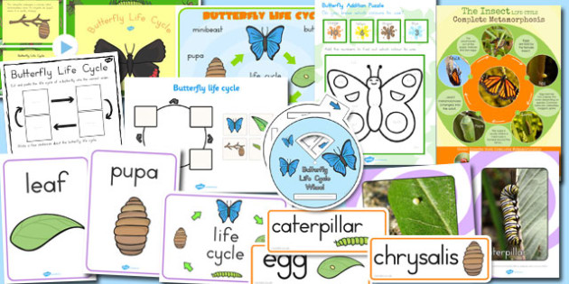 Butterfly Life Cycle Resource Pack - australia, butterfly, life cycle
