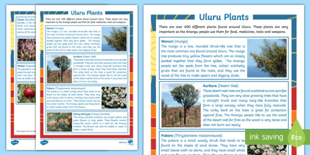 Uluru Plants Fact File