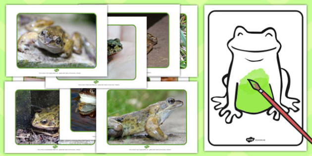 Colouring Mixing Frogs Resource Pack - colouring, frogs, pack