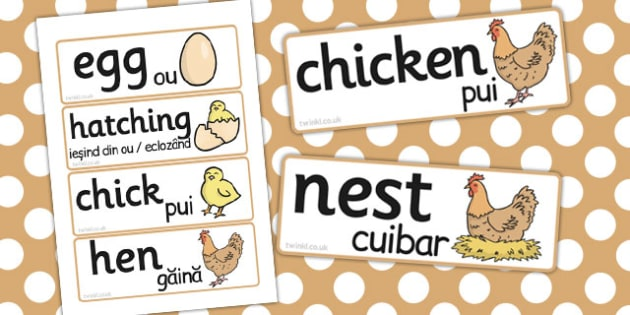 Life Cycle of a Hen Word Cards Romanian Translation - romanian