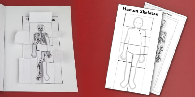 Human Skeleton Interactive Visual Aid - body, ourselves, science