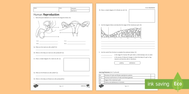 KS3 Human Reproduction Homework Activity Sheet - Homework, reproduction, human reproduction, reproducing, gamete, gametes, egg, cell, sperm, speciali