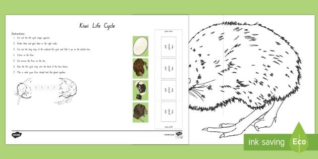 Kiwi Life Cycle Activity Sheet - KiwiLife, Cycle, NZ Native Birds, NZ Native animals, Sequence, Ordering, birds, flightless bird, wor