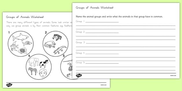 Animal Groups Worksheet - australia, animal, groups, worksheet