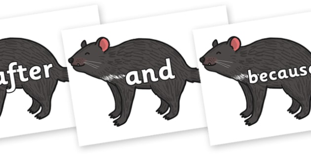 Connectives on Tasmanian Devil - Connectives, VCOP, connective resources, connectives display words, connective displays