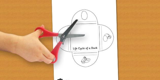 Duck Life Cycle Interactive Visual Aid - visual, duck, life cycle