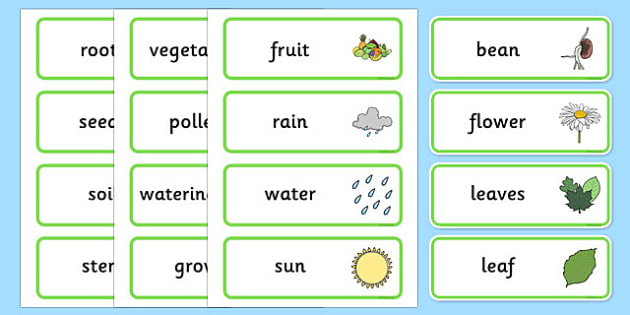 the tiny seed - Plant, Growth, Word Card, Topic, Foundation stage, knowledge and understanding of the world, investigation, living things
