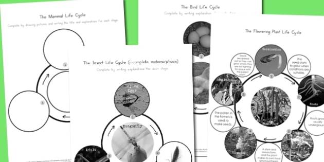 Year 4 Differentiated Life Cycles Worksheets - australia, life cycles