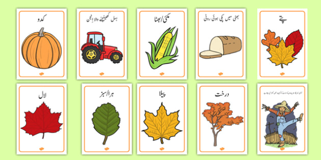 Autumn Display Posters Urdu - urdu, Autumn, poster, display, harvest, harvest festival, fruit, apple, pear, orange, wheat, bread, grain, leaves, conker