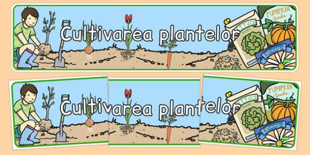 Cultivarea plantelor - Banner - cultivare, plante, banner, științe, creștere, dezvoltare, plantelor, romanian, materiale, materiale didactice, română, romana, material, material didactic