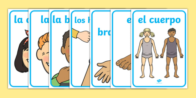 My Body Display Posters Spanish-Spanish