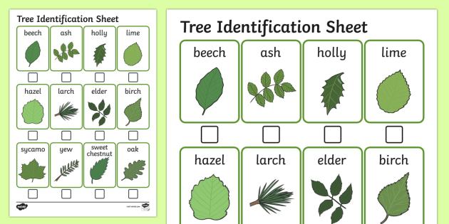 Tree Identification Sheet - australia, tree identification, sheet
