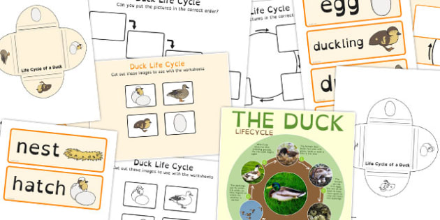 Duck Life Cycle Dyslexic Resource Pack - australia, duck, cycle