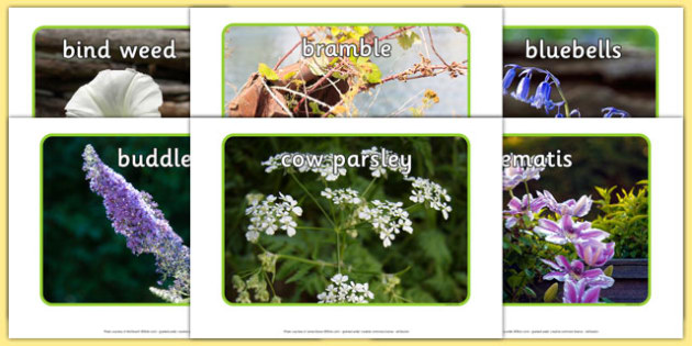 Flowers Display Photos - Flowers, flower, photo, photos, display, summer pictures, flower photos, rose, daisy, bluebell, buttercup, dandilion