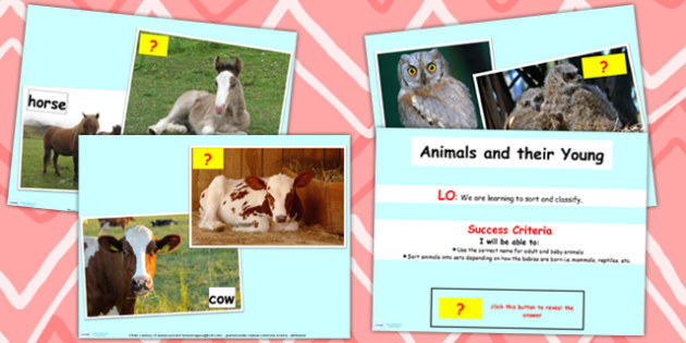 Animals Including Humans Offspring Lesson Flipchart - animal