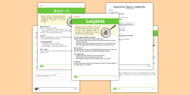 Ladybird Differentiated Reading Comprehension Activity Mandarin Chinese Translation - mandarin chinese, Reading, comprehension, read, text, question, sentence, ladybird, insect, beetle, wings, spots