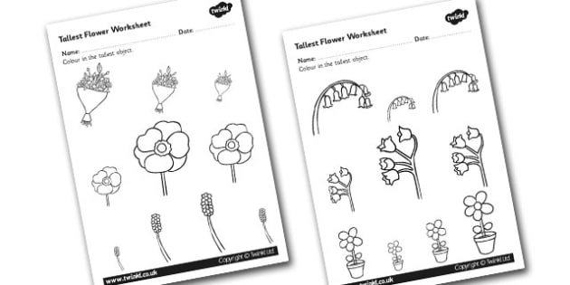 Flower Themed Tallest Object Worksheet - measure, height, flower