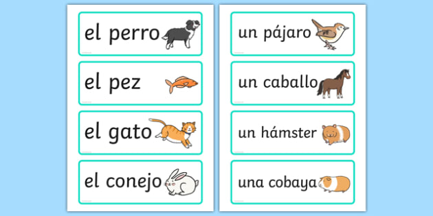 Spanish Pets Word Cards - mfl, pets, animals, cat, dog, ks2, ks1, primary, modern foreign language, display, visual aid