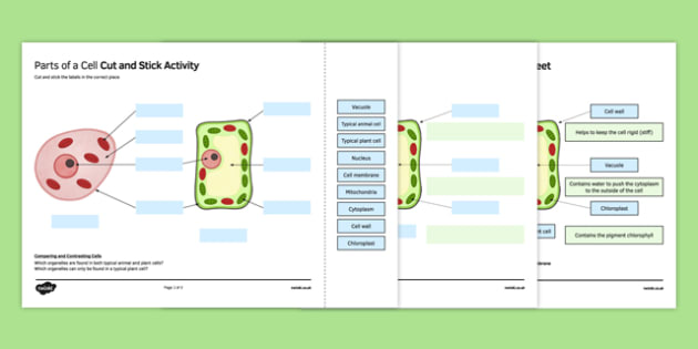 Parts of a Cell Cut and Stick Activity Sheet, worksheet, plenary activity