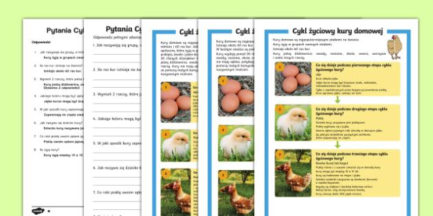 Czytanie ze zrozumieniem Cykl życiowy kury domowej - kurczak, pisklę, kwoka, kogut, kurczaczek, kura, zwierzęta, ptaki, nielot, kurnik, jajka, znosić,