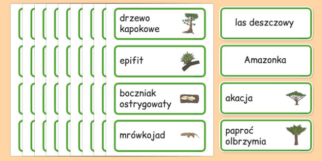 Karty ze słownictwem Las deszczowy po polsku - równik, geografia - rainforest, amazong, plants, trees, vocabulary, polish, poland, eal, rain, forest, habitat, environment