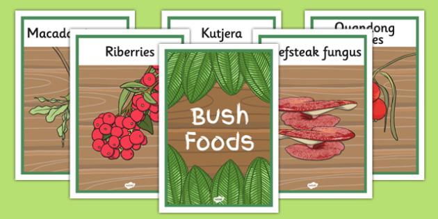 Bush Foods Display Posters - australia, bush food, display posters, display, posters, bush, food