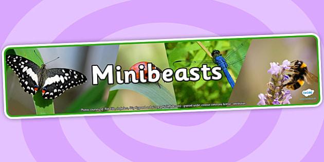 Minibeasts Photo Display Banner - minibeasts, photo display banner, photo banner, display banner, banner,  banner for display, display photo, display