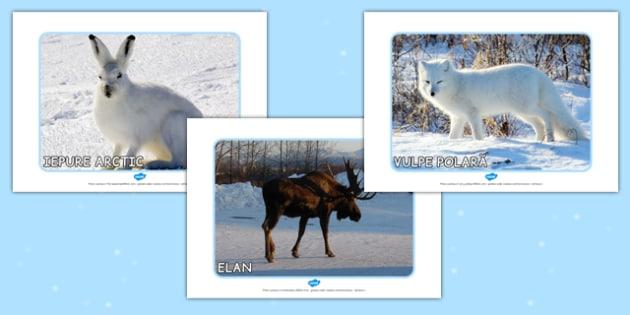 Animalele la poli - Planșe cu fotografii