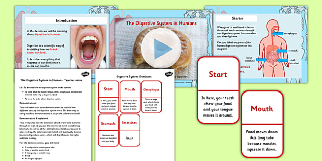 The Digestive System in Humans PowerPoint and Activity Pack