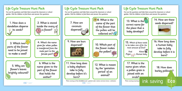 Life Cycle Question Card Hunt - life cycle, life processes, life cycle question cards, life cycle quiz game, life cycle question game, life cycle questions