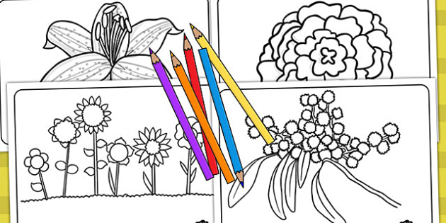 Flowers Colouring Sheets - Australia, Flowers, Colouring, Sheets