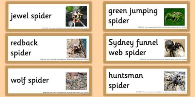 Australian Spiders Word Cards - australia, spiders, word cards, word, cards