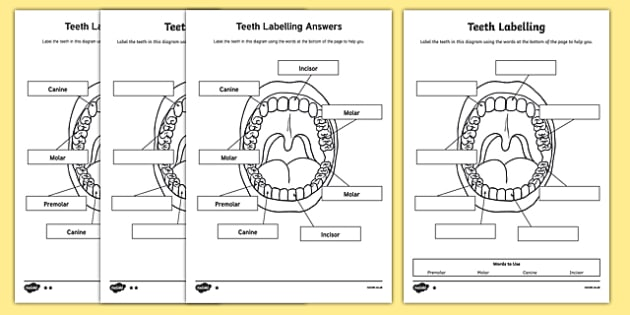 Labelling Worksheet - teeth, ourselves, my body, labels