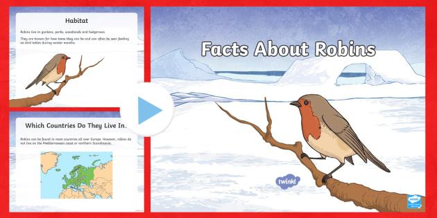KS2 Facts About Robins PowerPoint - robin, robins, waitrose advert, garden birds,
