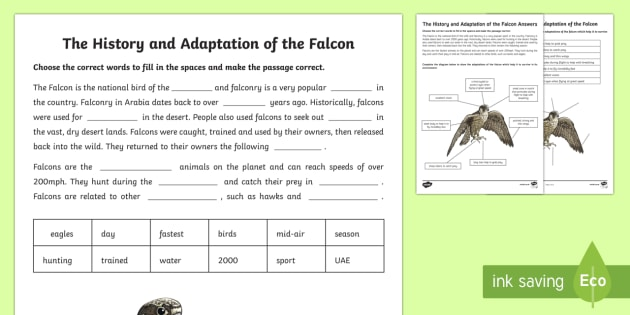 The Falcon Activity Sheet - Science, Living World, falcon, adaptation, UAE, desert, animal, national bird, bird, worksheet