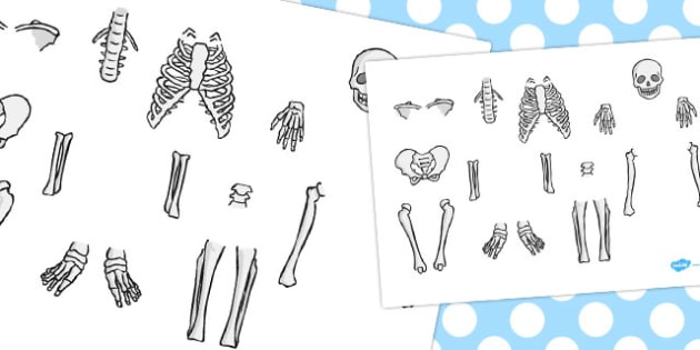 Skeleton Cut Out - humans, skeletons, activity, activities, body