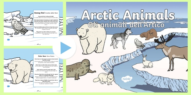 Winter Arctic Animals Habitat PowerPoint English/Italian - Winter Arctic Animals Habitat Powerpoint - powerpoint, power point, interactive, powerpoint presenta