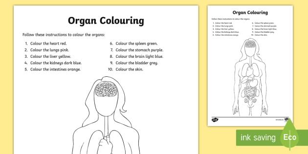 Organs Colouring Activity Sheet - The Human Body, human, body, body parts, health, anatomy, worksheet