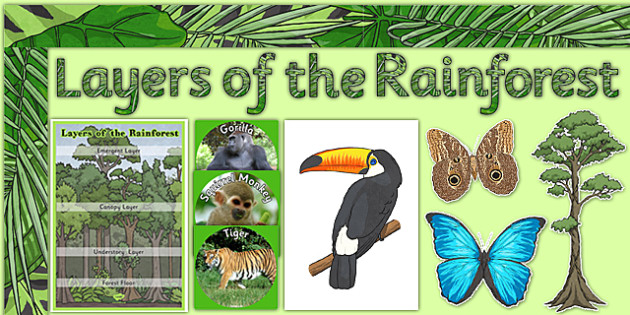 Layers of the Rainforest Display Pack - layers of the rainforest, layers, rainforest, display pack, display, pack