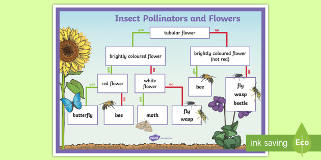 Identifying Insect Pollinators Display Poster - pollination, pollinators, insect pollinators, flowers and pollination, pollinating insects, flowers