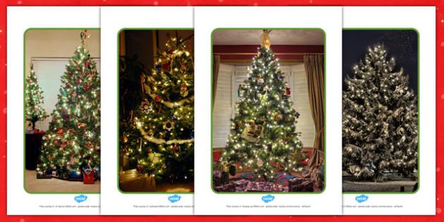Christmas Tree Display Photos - display, photos, christmas, tree